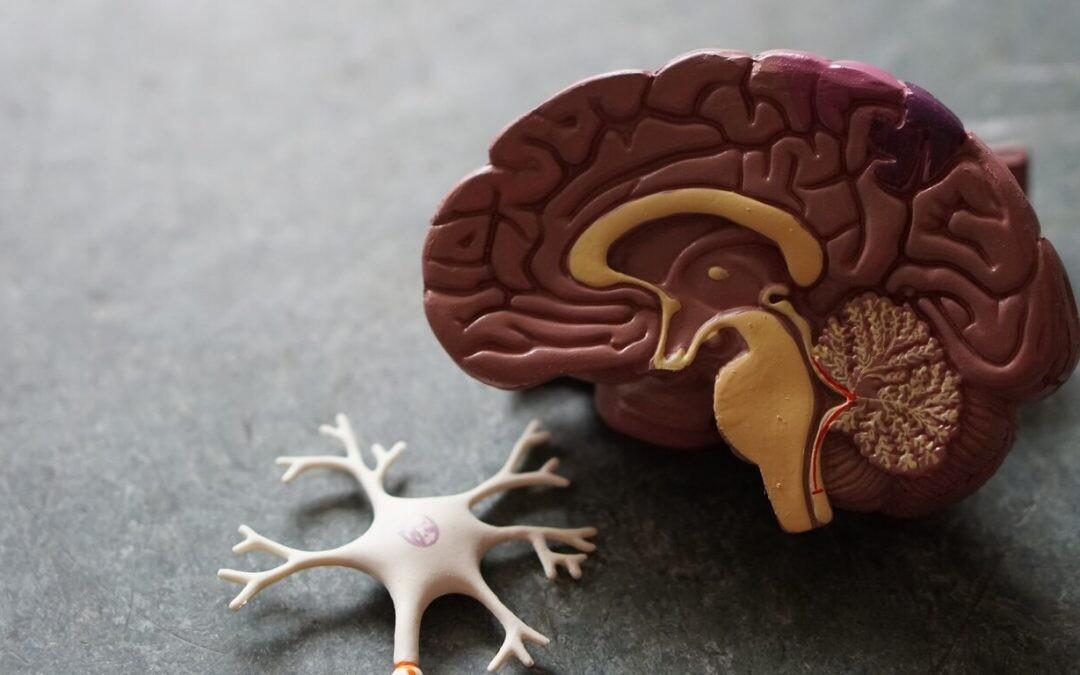 La reinvención del neuromarketing: cómo evaluar la respuesta del consumidor cuando este no sale de casa