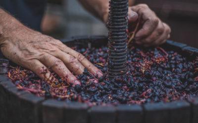 El enoturismo no es solo ver paisajes y beber vino: estas rutas por España te sorprenderán