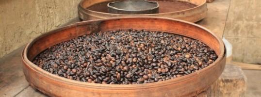granos de cafe destacada