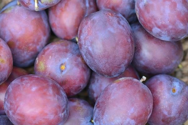 plums-472950_1280