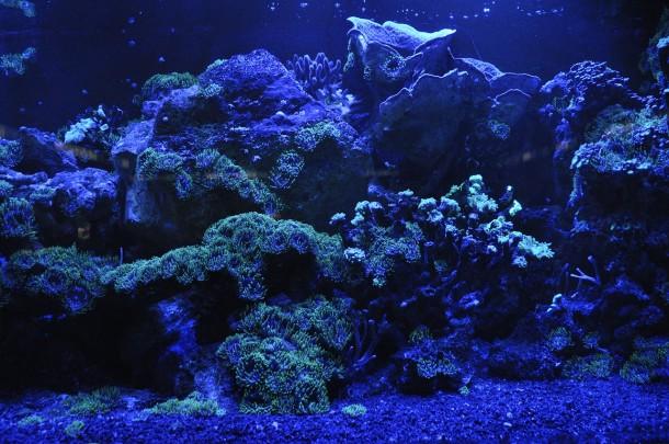 coral-reef-692957_1280