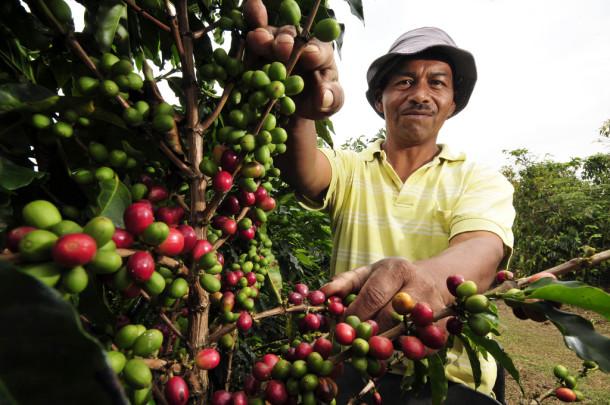 llega el turismo del café