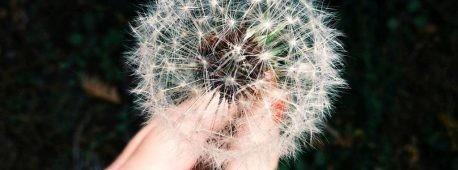alergias prevenir