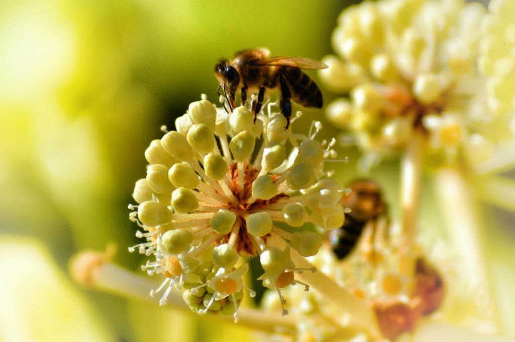 alergias primavera 2018 prevenir