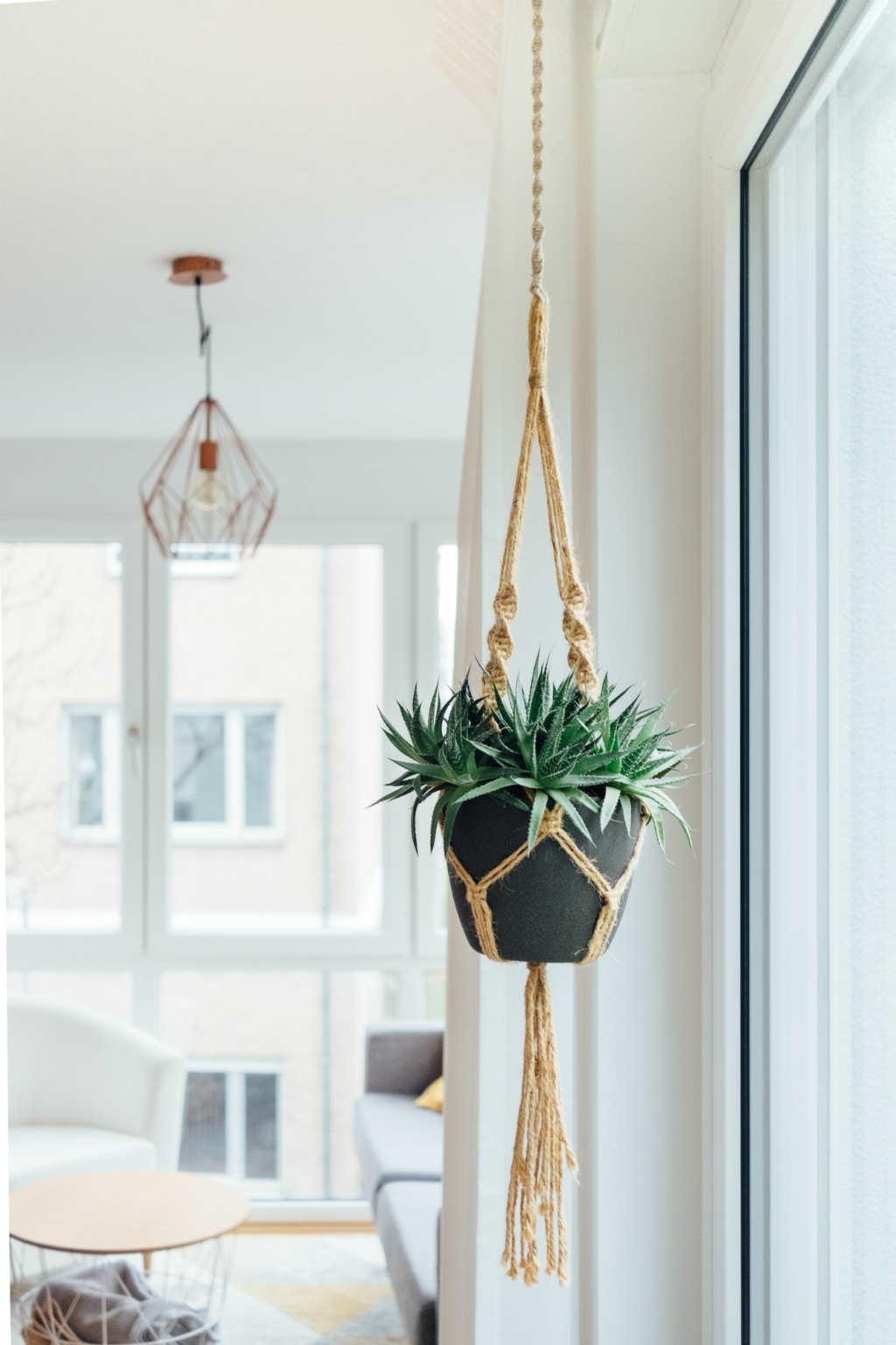 mantener aire puro en casa