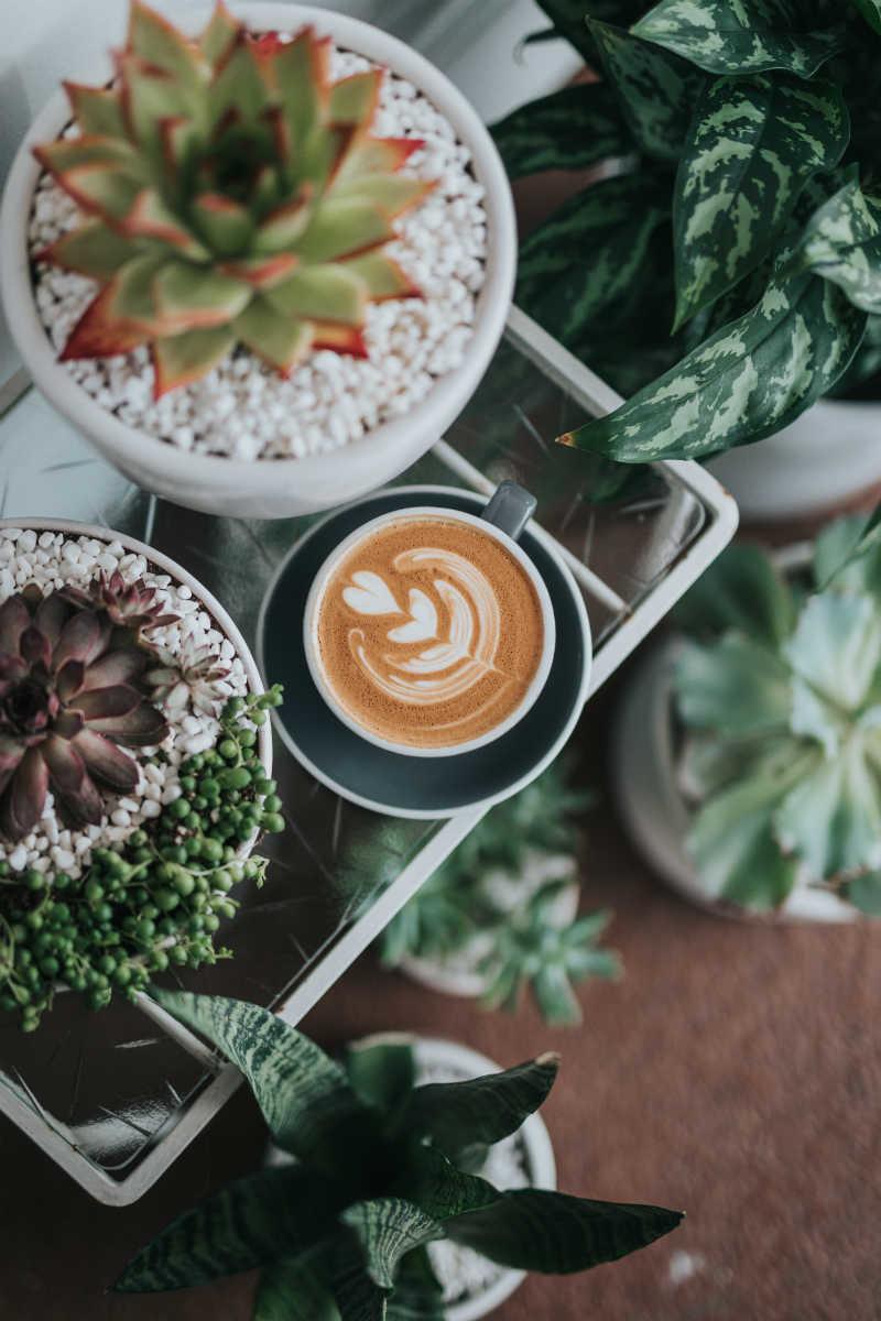 Café en Instagram: cuentas que seguir Mi Mundo Philips
