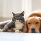 pelos animales casa