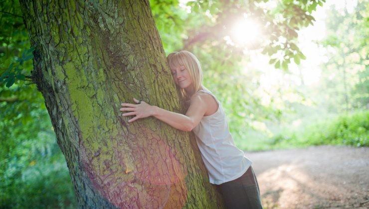 Adopta un árbol