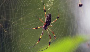 Esta pequeña tela de araña puede revolucionar el mundo de las baterías