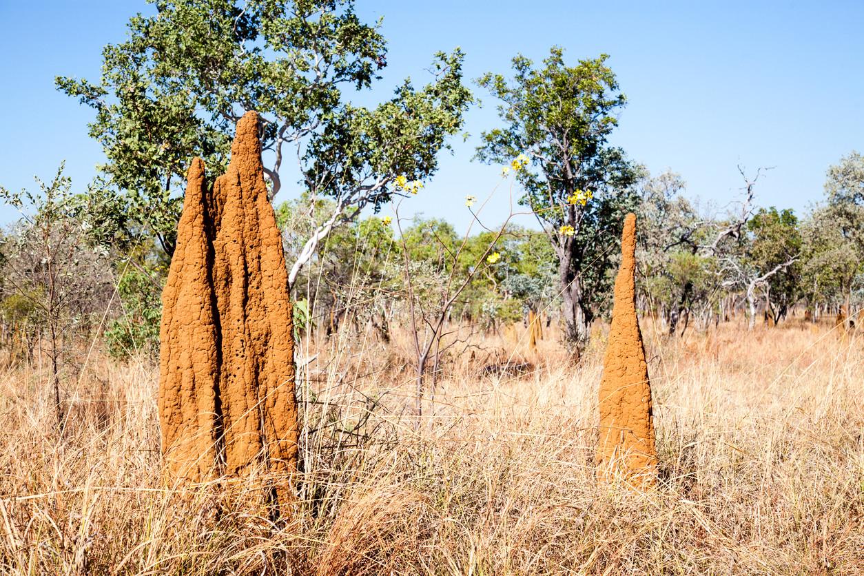arquitectura de las termitas