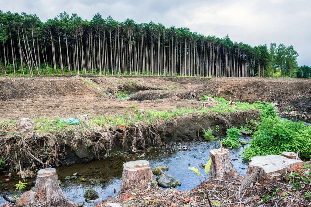 CO2 deforestación biodiverdidad