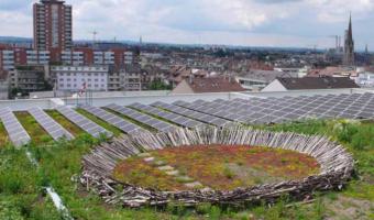 Por qué Copenhagen decidió que todos sus techos fueran verdes