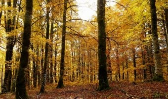 Cuatro bosques del norte de España para disfrutar del color del otoño