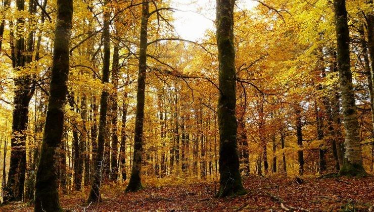 Irati bosque