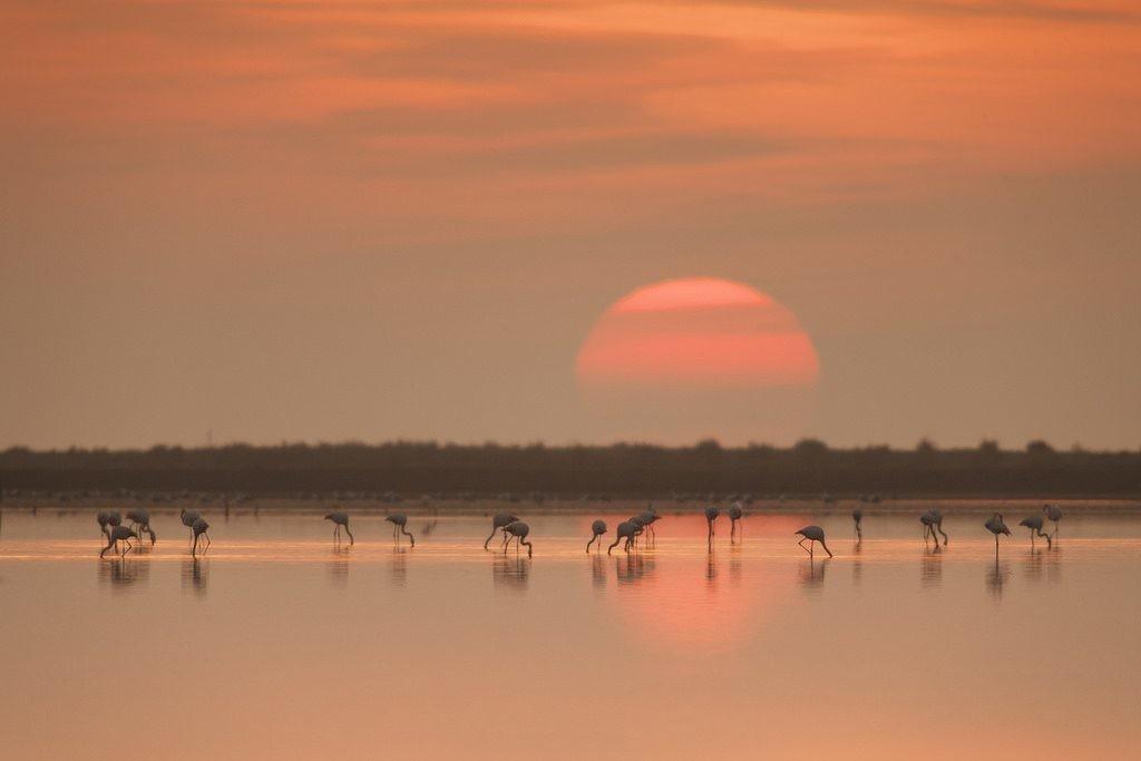 Turismo Sostenible - Ornitologia