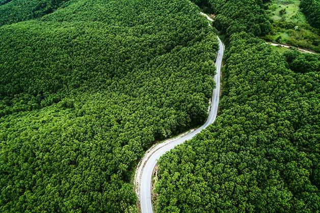 carretera atravesando un bosque verde