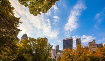 Así es como los bosques podrán generar la energía de nuestras ciudades