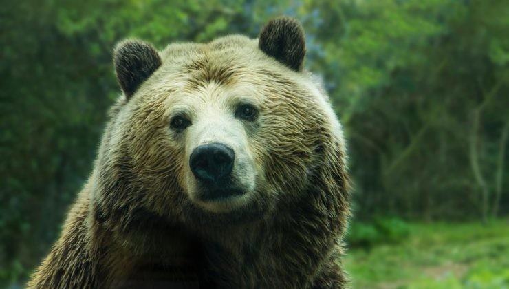 Descubre la Senda del Oso en Asturias