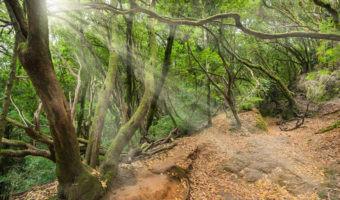 Baños de bosque, aprendiendo a acabar con el estrés en contacto con la naturaleza