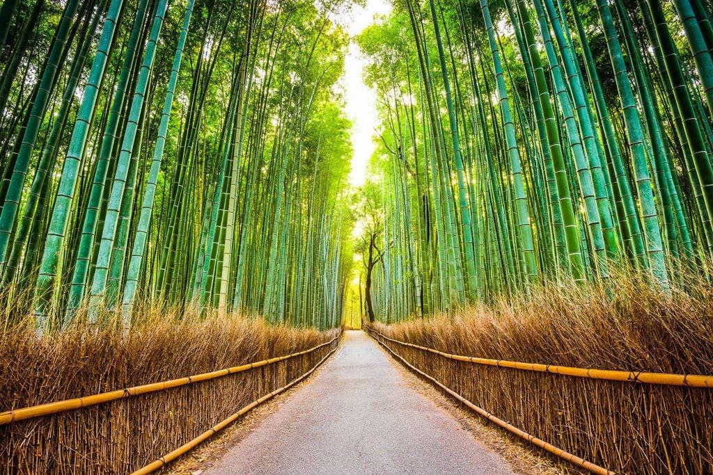 Bosque bambú Japón