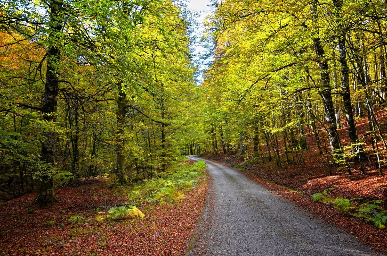 Bosque norte Espana