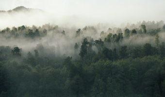 La reforestación es la otra manera de ganar la batalla a la contaminación