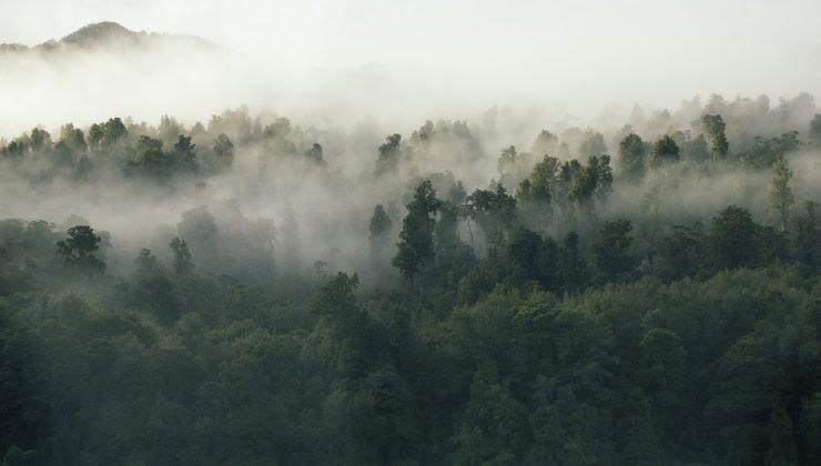 reforestacion bosque arboles co2 contaminacion