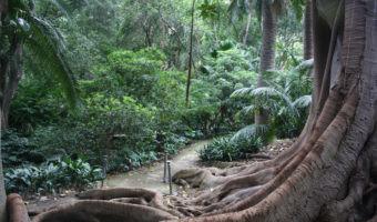 Inspírate en la naturaleza sin salir de la ciudad: los cinco jardines botánicos más bonitos de España