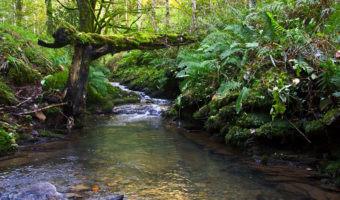 Ruta al Parque Natural Pagoeta, un oasis de naturaleza muy cerca de San Sebastián