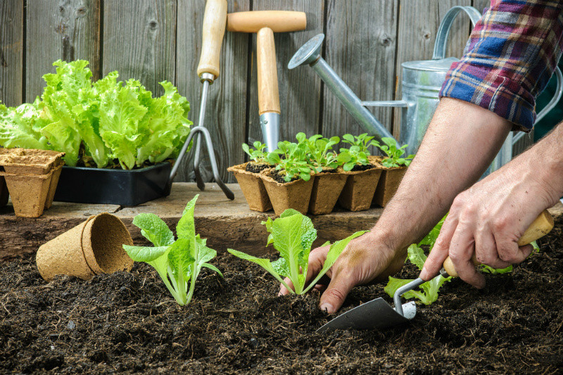 Cultivar un huerto desestresa