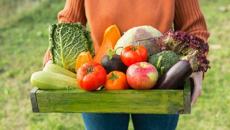 Verduras frescas de huerto particular