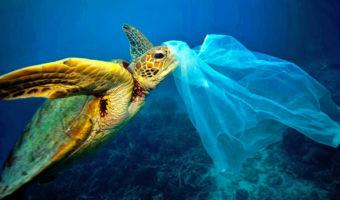 Nueve iniciativas alrededor del mundo que quieren librar al océano de plásticos