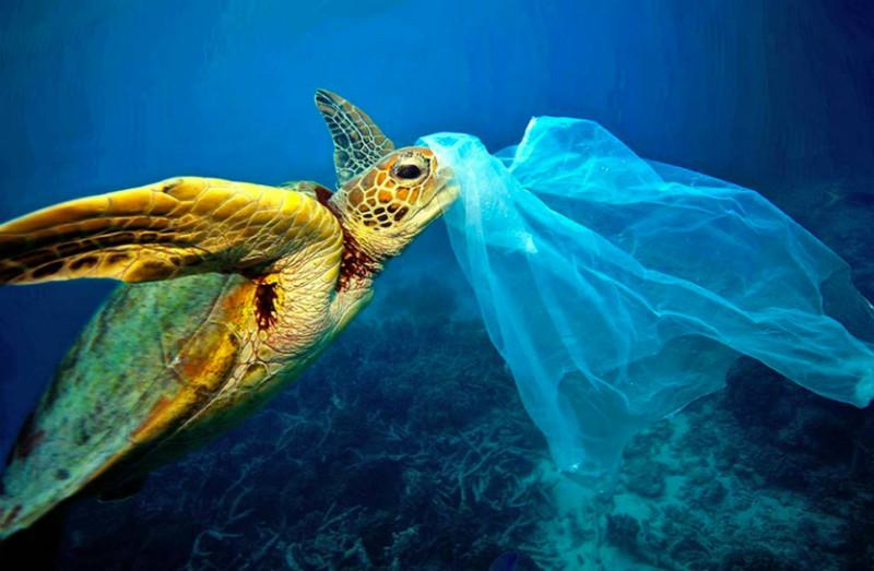 Resultado de imagen de oceano de plastico