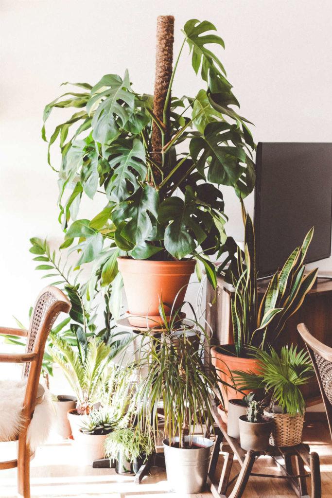 plantas en casa para respirar mejor