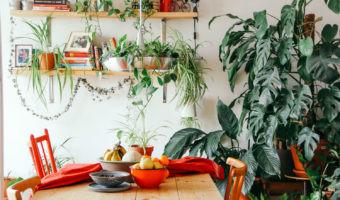 Cómo llenar tu casa de plantas y respirar mejor