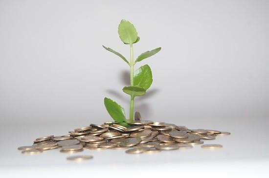 Planta que crece sobre monedas
