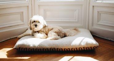 comunidad de vecinos perro mascotas prohibidas