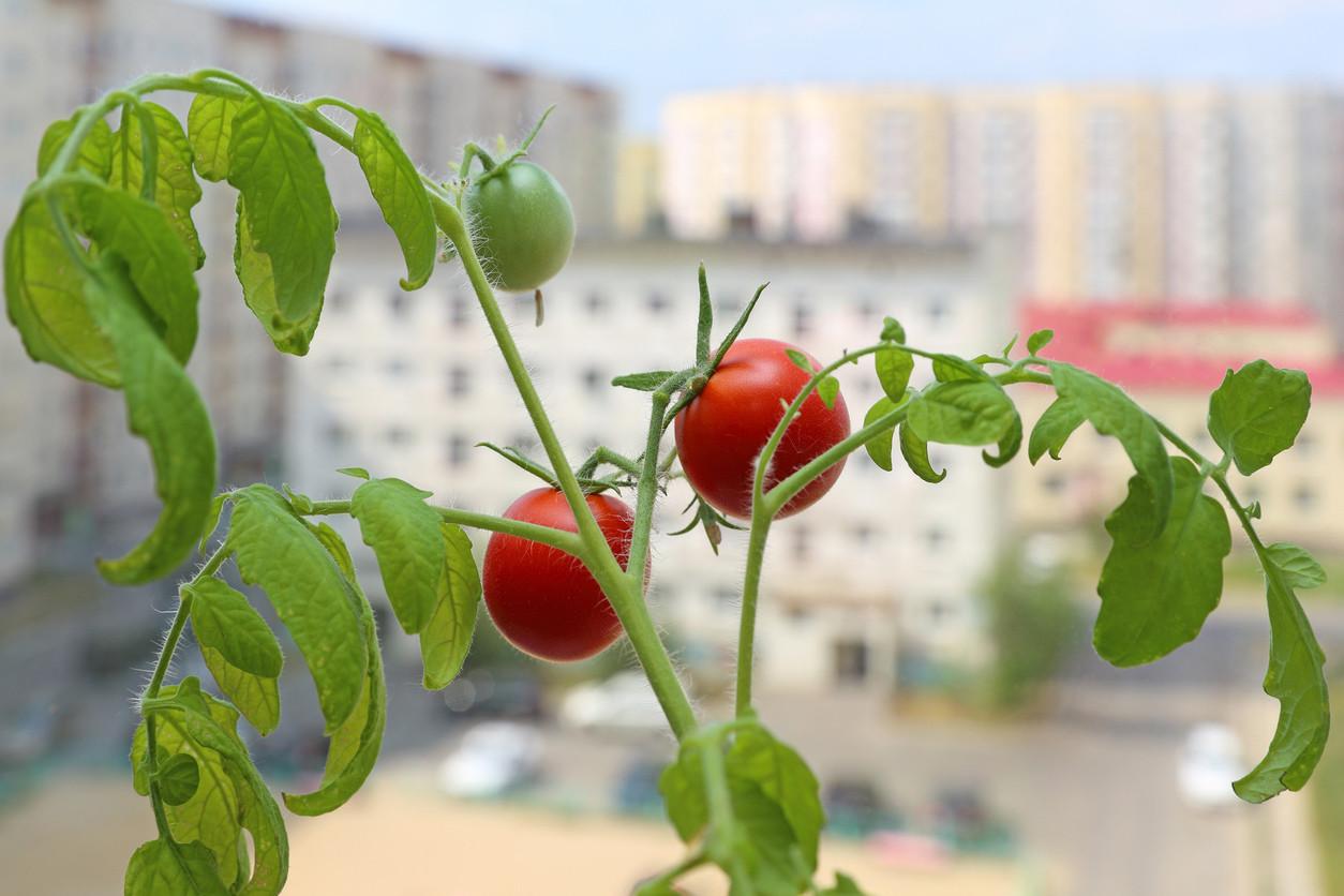 Agricultura ecológica en las ciudades sostenibles