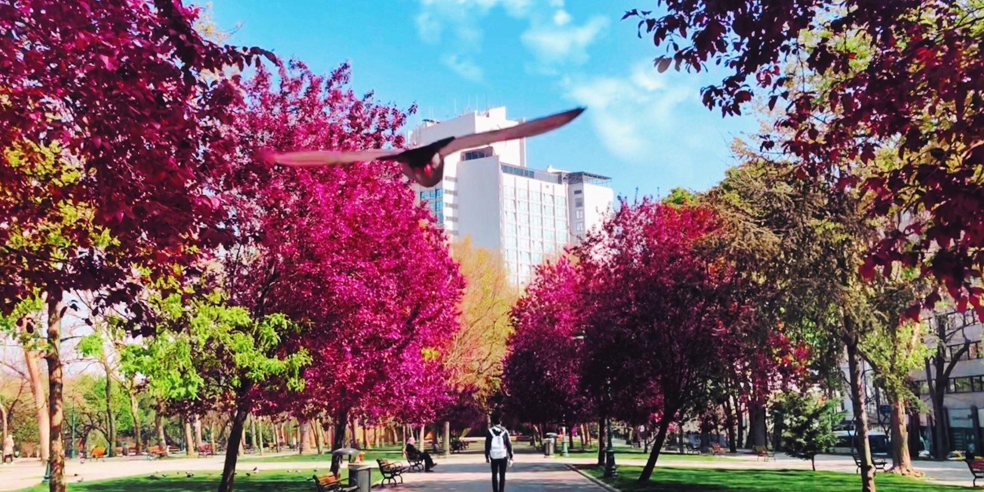 urban metabolism park
