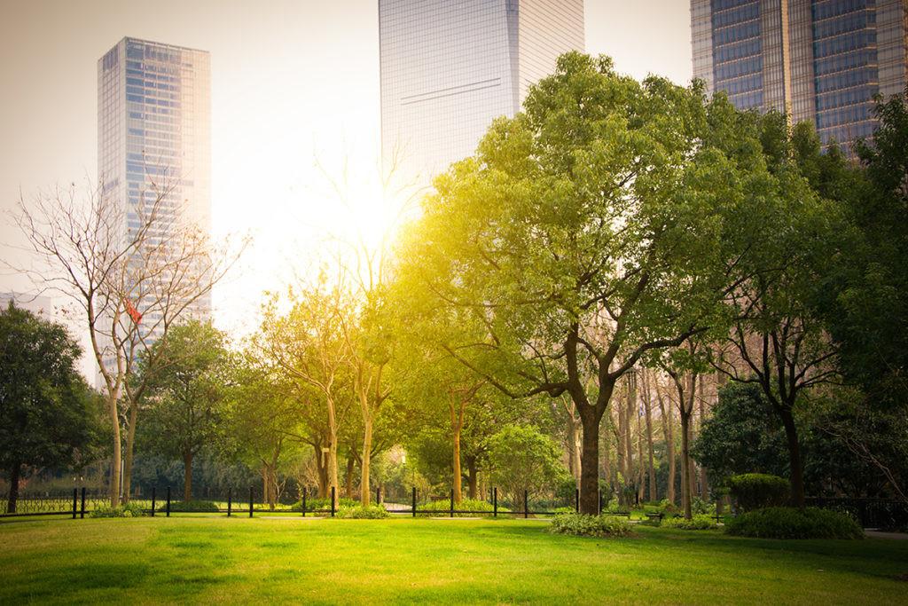 parque con una gran zona verde