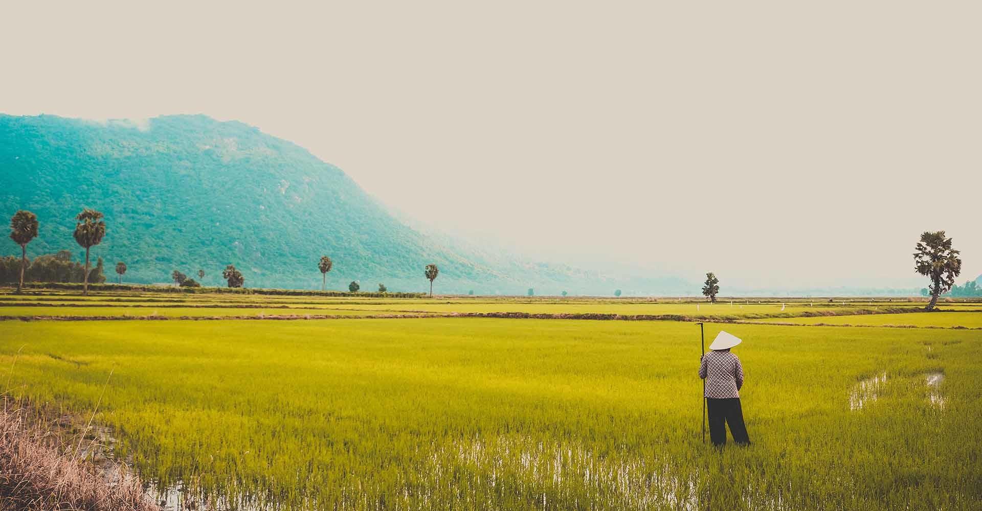 Analizamos qué es la agricultura climáticamente inteligente.