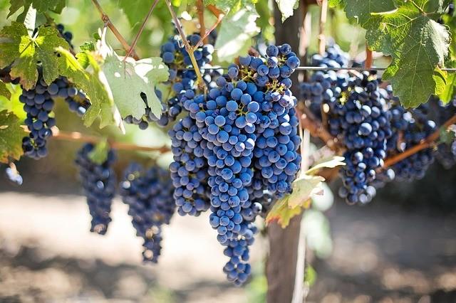 enoturismo-uva